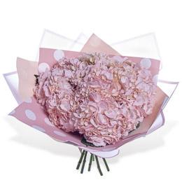 Букет из 7 розовых Гортензий в Упаковке Москва